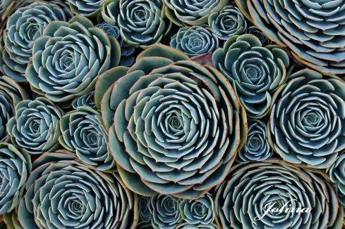 Геометрия в природе (29 фото)