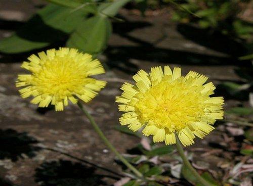 Топ-25: Редкие и потрясающе красивые цветы