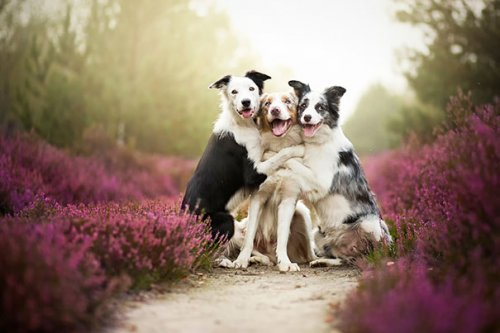 Очаровательная дружба между собаками (37 фото)