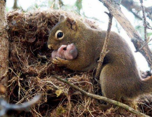 Малыши и мамы из мира животных (20 фото)