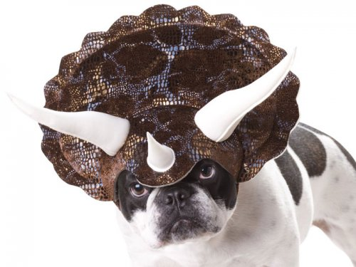 Собаки в костюмах трицераптора (5 фото)
