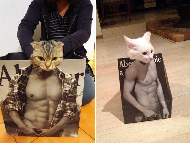 Картинки по запросу коты в пакетах