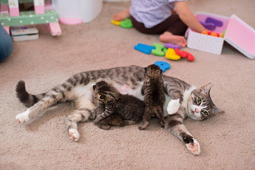 Потеряв своих котят, кошка Майки стала приёмной матерью для других (5 фото)