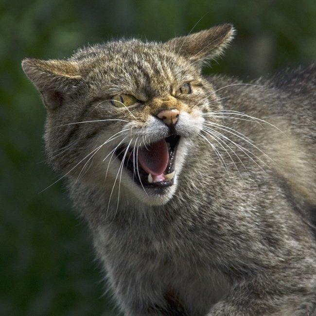 Картинка дворовый кот