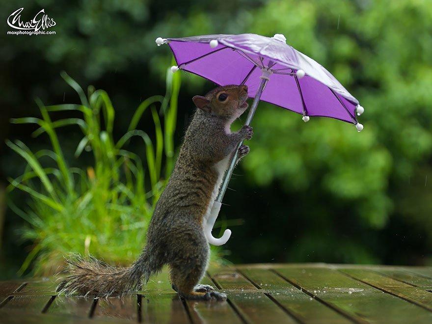 легко картинки прикольные под зонтом пока соображу