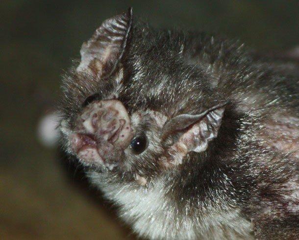 Vampire  Wikipedia