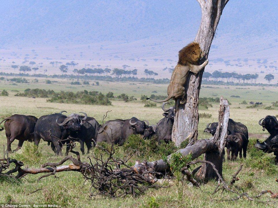 """Путешествия """"Фауна"""": Животный мир и мы (+ видео)"""