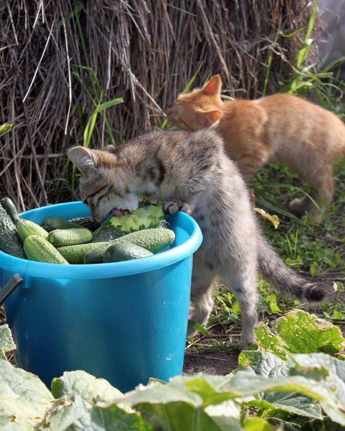 Конкурс животных на яндексе