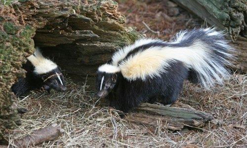 Топ-25: Странные, но эффективные механизмы защиты диких животных