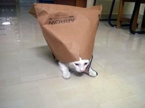 Смешные кошки в пакетах, кульках и сумках (20 фото)