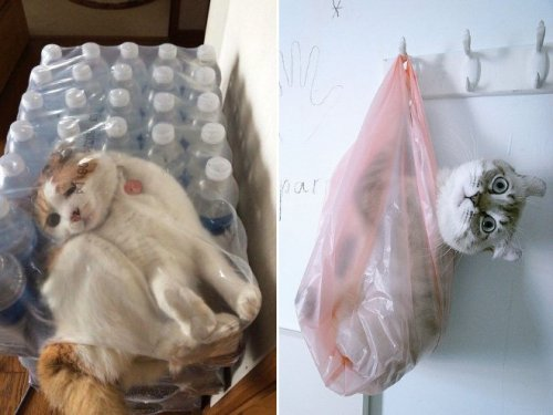 Смішні кішки в пакетах, кульках і сумках (20 фото)