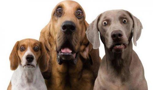 Смешные животные, которых удивили (32 фото)