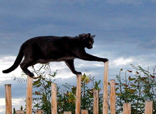 Умело балансирующие кошки (10 фото)