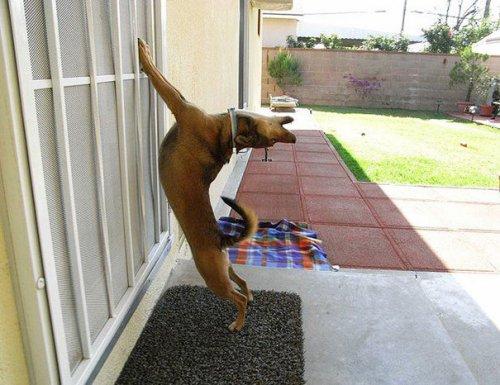 Домашние животные, которые хотят попасть домой (39 фото)