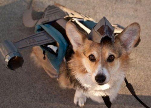 Собаки в костюмах персонажей фильмов и сериалов (10 фото)