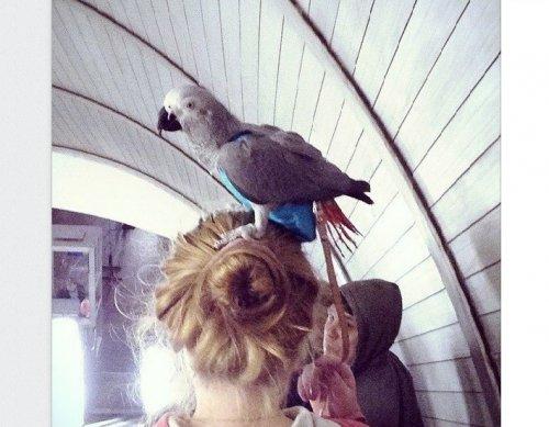 Странные пассажиры в метро (20 фото)