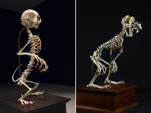Скелеты диснеевских мультперсонажей (7 фото)