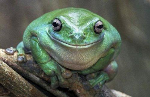 Животные, чья улыбка поднимет вам настроение (25 фото)
