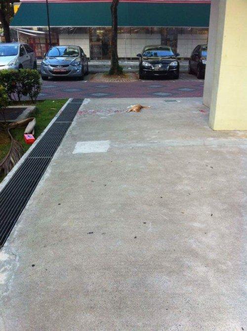 Истекающая кровью кошка, которой никто не хотел помогать (4 фото)