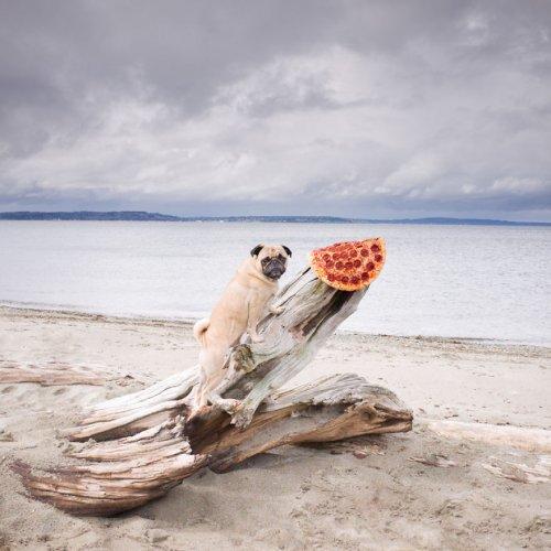 Приключения пиццы в фотографиях Джонпола Дугласа (13 фото)