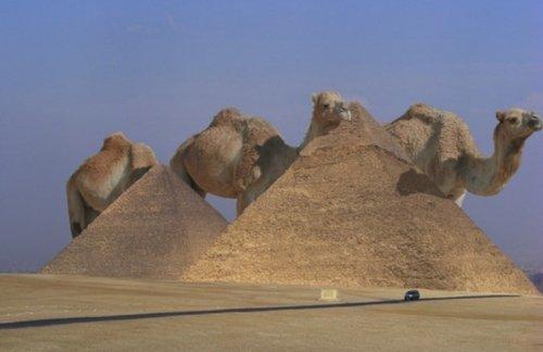 Животные-гиганты (10 фото)