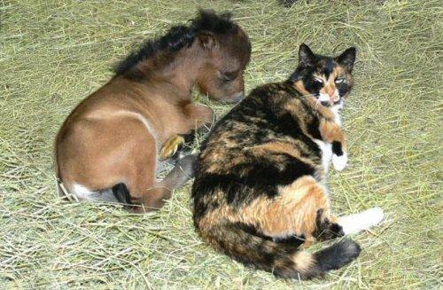 Миниатюрные лошадки, которым будет рад любой ребёнок (25 фото)
