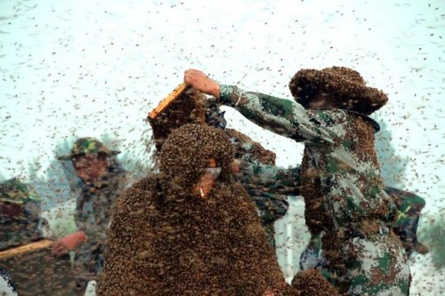 Миллион пчёл на теле: новый рекорд Гиннесса (3 фото)