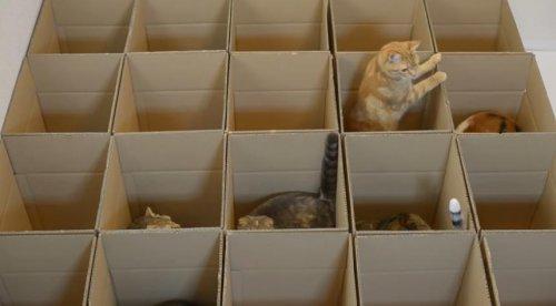Идеальный кошачий лабиринт