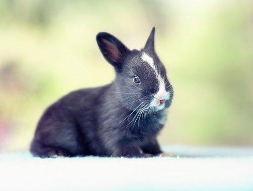 Очаровательные крольчата в фотографиях Ашрафула Арефина (16 фото)