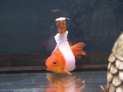 Слинги для рыбки из корковой пробки (3 фото + видео)