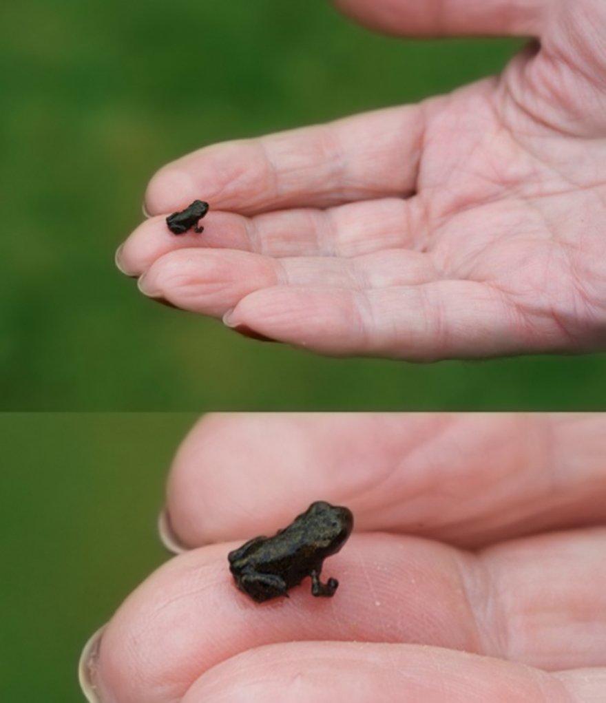 Необычные и прикольные лягушки и жабы ...: addjoy.ru/kategorii/images/12221-post-12221