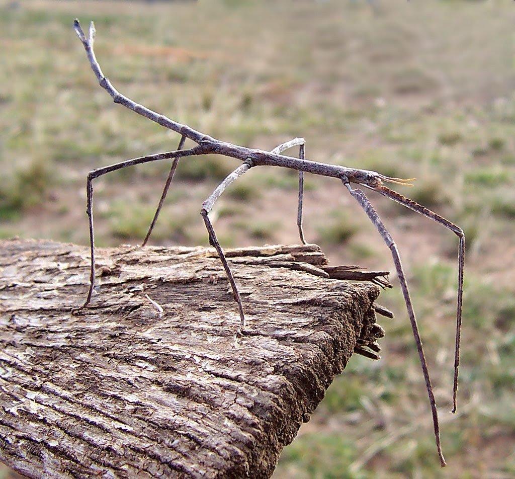 Топ-10: Самые жуткие жуки планеты