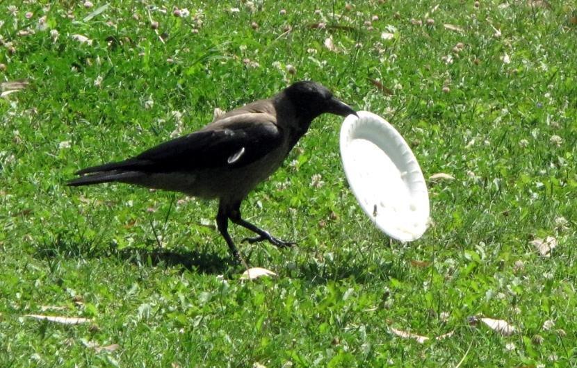 птица приколов