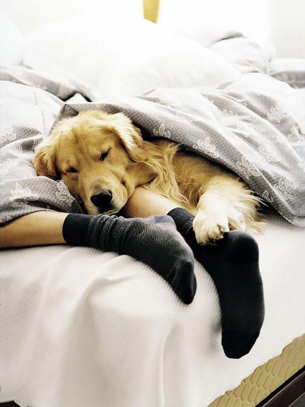 во сне прятаться от собаки больше