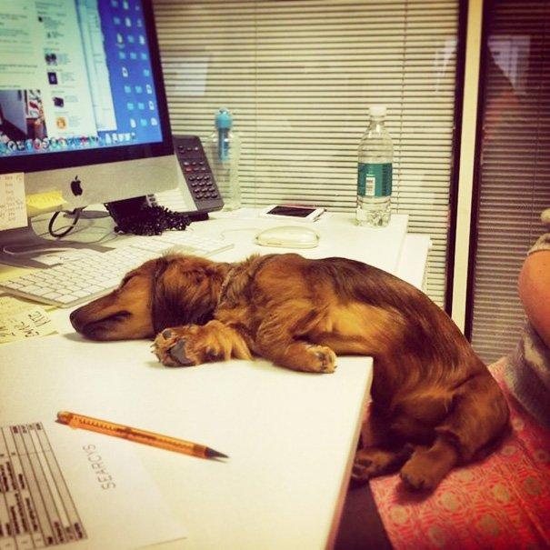 Прикольные картинки устал после работы