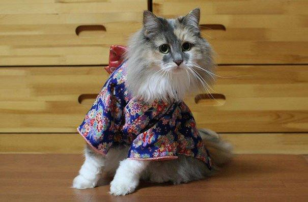 Картинки по запросу Кошки в кимоно – это тренд в Японии!