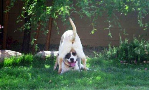 Смешные и забавные собаки (25 фото)