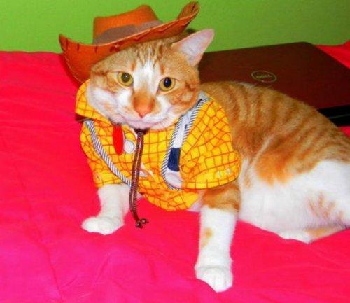 Кошки в костюмах мультперсонажей (10 фото)