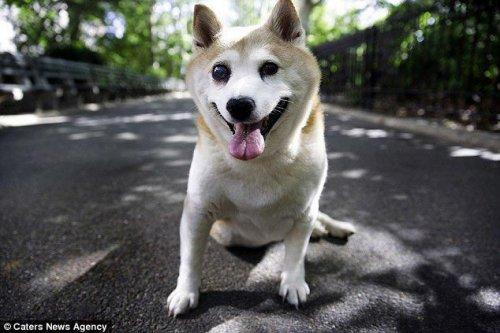 Корица — самая улыбчивая в мире собака (10 фото)
