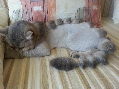 Кошки с оригинальными стрижками (15 фото)