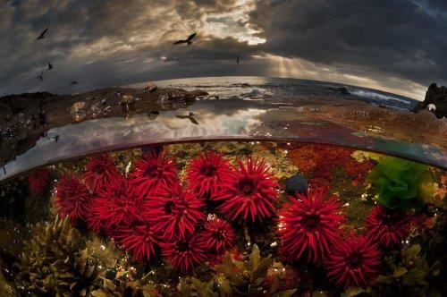 Два параллельных мира в снимках Мэтти Смита (15 фото)