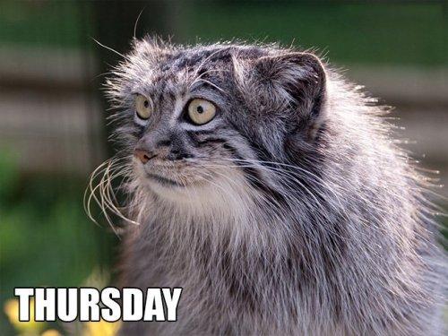 Неделя — в кошачьих мемах (7 фото)