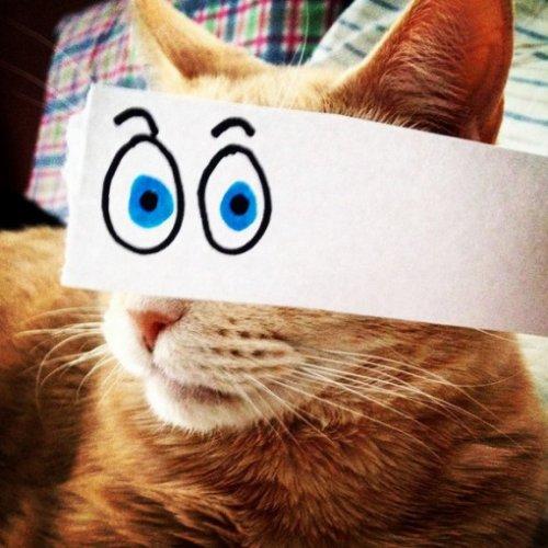 Коты с нарисованными глазами (10 фото)