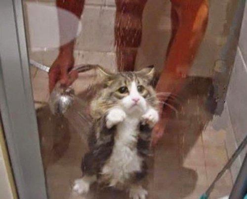 Кошки, которые не любят купаться (11 фото)