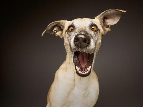 Забавные фотопортреты собак Ельке Фогельзанг (17 фото)