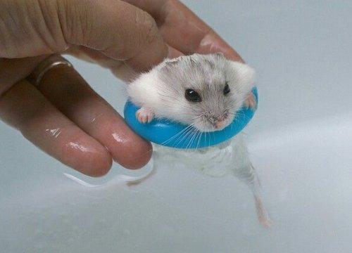 Забавные животные, любящие поплавать со спасательным кругом (10 фото)