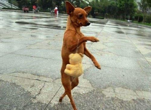 Смешные и забавные фотографии с собаками (23 фото)