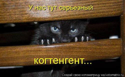 Новая котоматрица для хорошего настроения (30 фото)