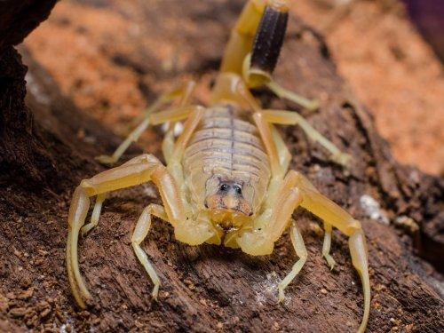 Топ-10: Самые маленькие и смертельно опасные существа на Земле