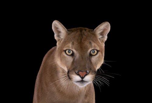 С глазу на глаз: животные в фотопроекте Брэда Уилсона (15 фото)